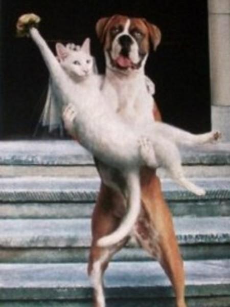 Dog cat wedding hard ticket to home video dog cat wedding junglespirit Images
