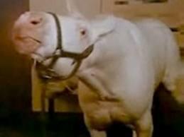 animal house horse