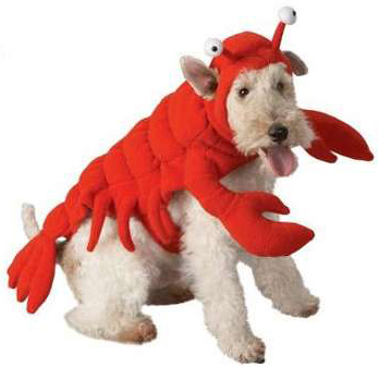Lobster-Dog-Costume1